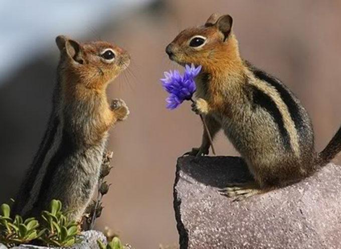 """17 Animali """"Innamorati"""" Che Vi Regaleranno Un Sorriso Anche Nella Giornata Più Buia"""