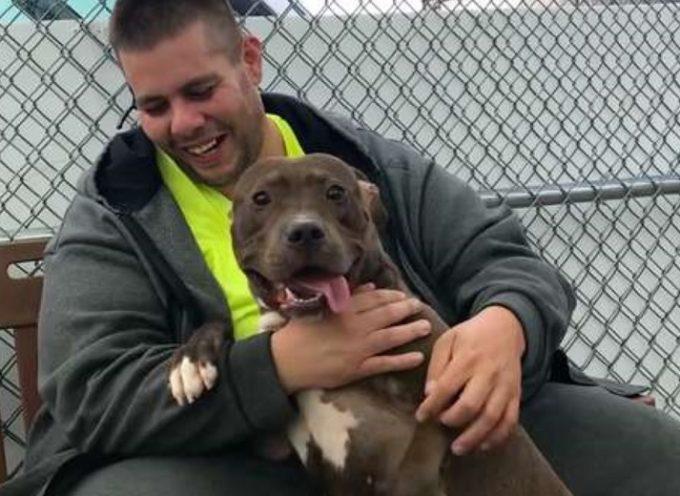 Ha guidato più di 4000 chilometri per salvare un bellissimo pitbull da un terribile destino