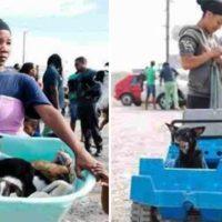 L'ingegno di una donna per far curare i suoi cuccioli