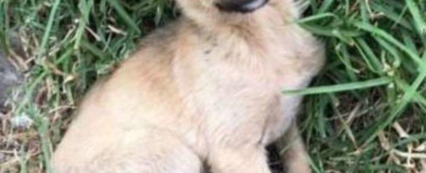 Questo cagnolino corre a salutare un viaggiatore, sarà la sua fortuna