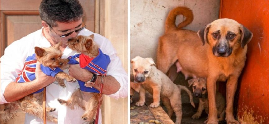 Simon Cowell dona 30.000 dollari per cercare di far smettere il commercio di carne di cane in Corea del Sud