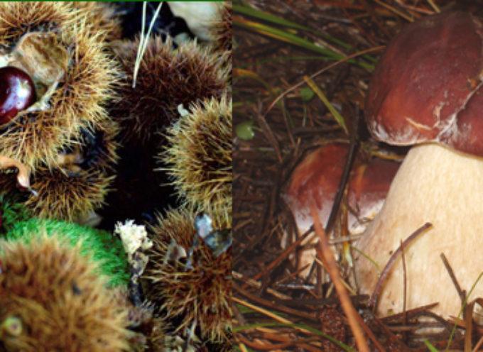 Tempo di castagne e tempo (ancora) di funghi