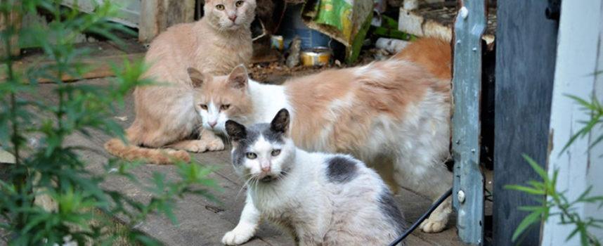 Più di 170 gatti sono stati salvati da una casa dell'orrore nel New Jersey