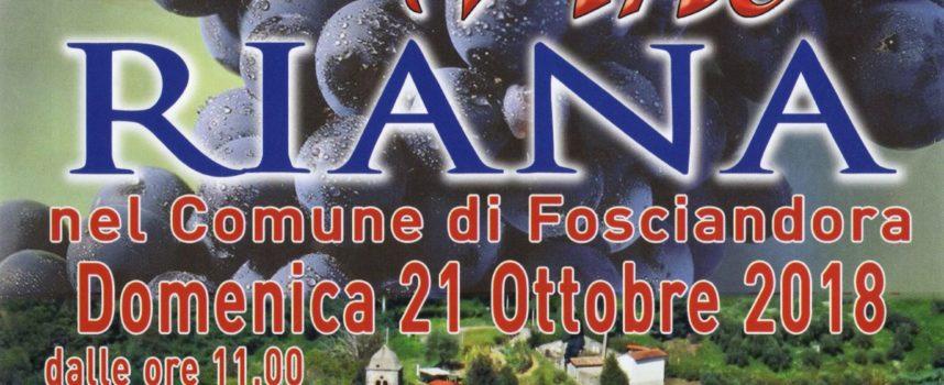 Domenica 21 ottobre: e' tutto pronto a Riana di Fosciandora per la tradizionale Festa del Vino