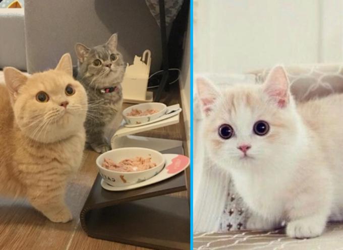 l'unico gatto al mondo che resta piccolo per tutta la vita