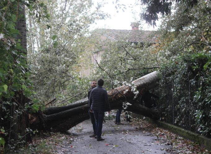 """Maltempo, Confagricoltura Toscana: """"Già 5 milioni di danni"""""""