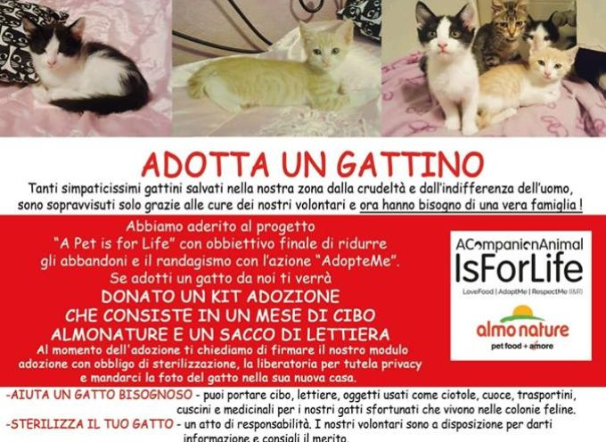 Micio Day, domani a  Barga