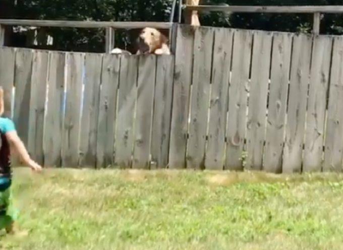 Un bimbo di 2 anni e il cane del vicino riescono a giocare nonostante il recinto