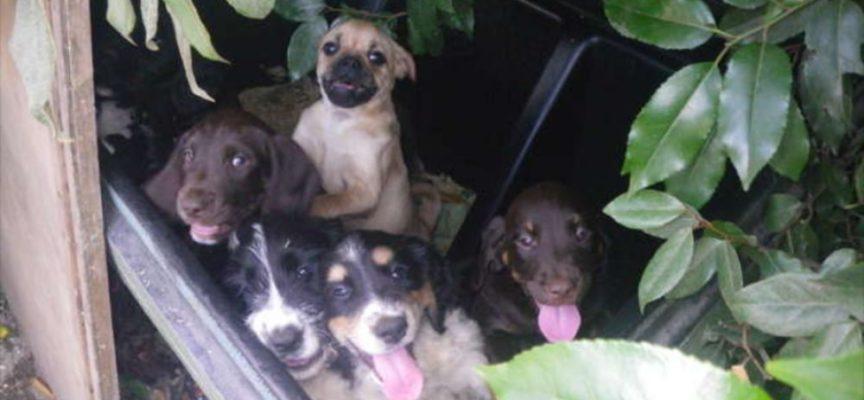 Un uomo senza cuore abbandona 9 cuccioli gravemente malati perché non poteva venderli