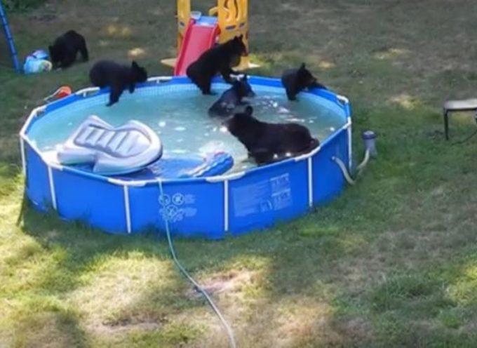 Una famiglia di orsi si fanno il bagno davanti agli occhi attoniti dei proprietari della casa