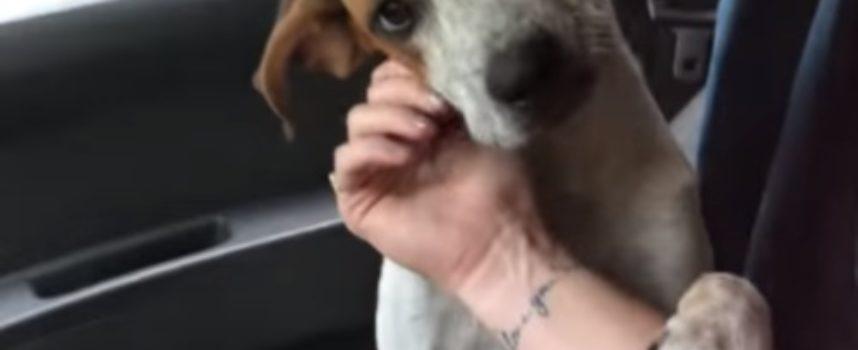 La gratitudine di un cane nei confronti della sua salvatrice. La reazione che hanno entrambi lascia davvero senza parole.