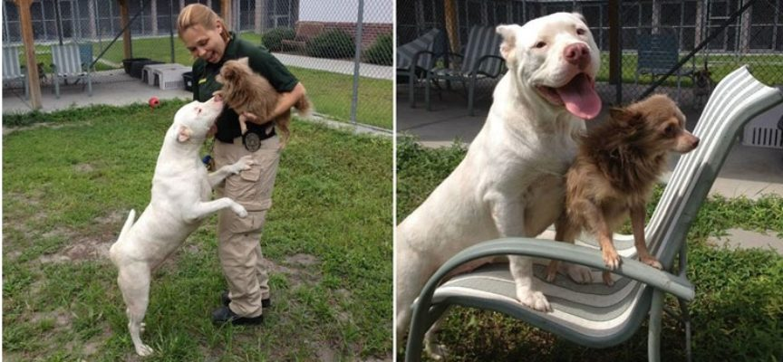 Il cane che ha cercato aiuto per il suo amico quasi cieco, la sua storia ti spezzerà il cuore