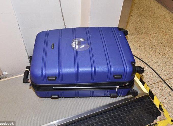 Abbandonano un pitbull pugnalato, dentro una valigia per farlo morire