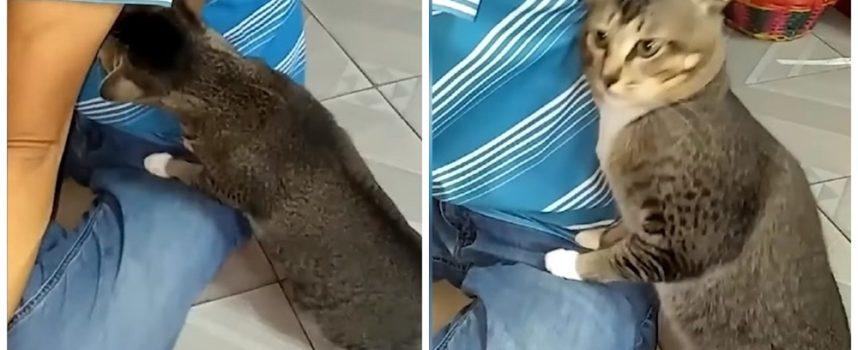 Lo svenimento di un gatto dopo aver sentito l'odore dell'ascella diventa virale nei social