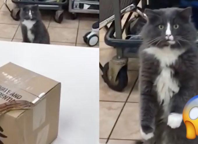 La reazione di un gatto dopo essere stato faccia a faccia con un enorme serpente diventa virale