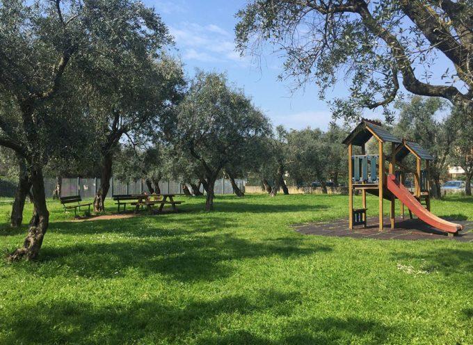 SERAVEZZA – Patrimonio: 3 ettari di terreni pubblici con 430 piante di olivo affidati alle cure dei privati.