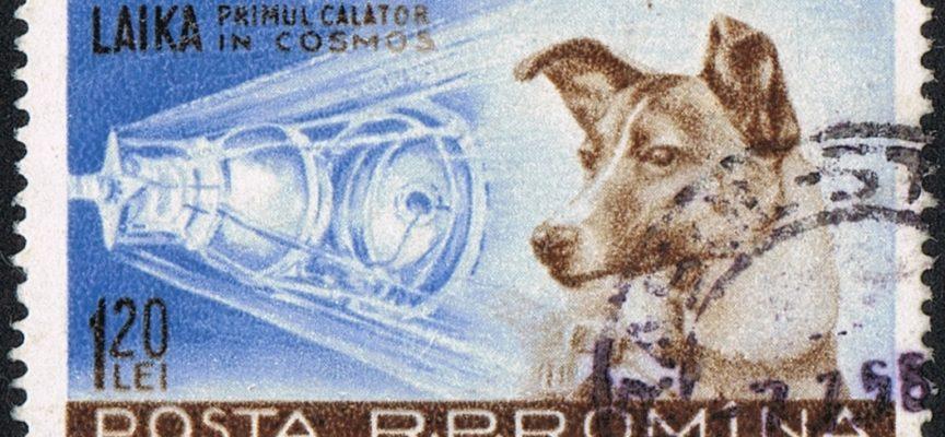 Accadde Oggi, 3 Novembre: 1957, Laika nello spazio a bordo dello Sputnik 2