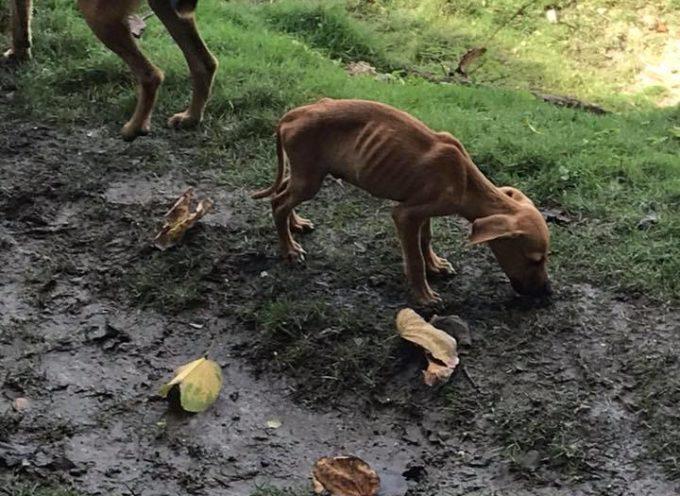 Mentre è in vacanza vede un cucciolo pelle e ossa: ecco cosa fa per riuscire a salvarlo