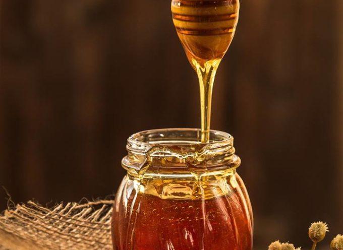 un seminario sulla scoperta del miele e i suoi abbinamenti