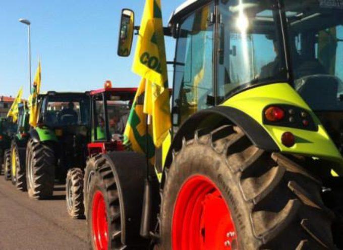 AGRICOLTURA IN FESTA PER LA GIORNATA DEL RINGRAZIAMENTO, A CASTELNUOVO DI GARFAGNANA