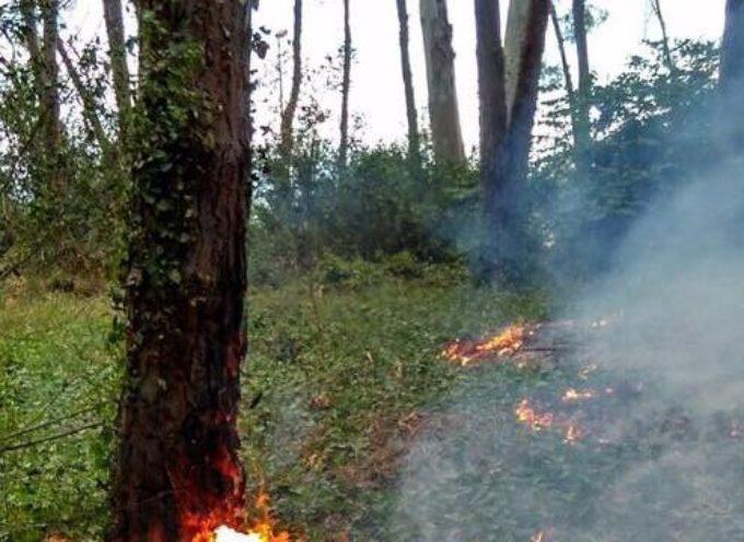 Contributi per salvaguardia boschi, dalla regione toscana