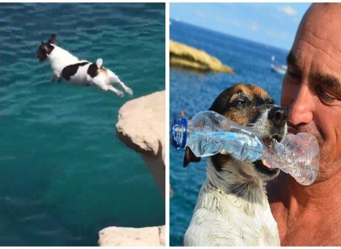 Titti, il cane che aveva paura della scogliera fino a quando il suo amico umano si è tuffato per primo