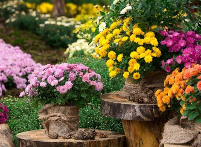 La leggenda dei crisantemi e il loro significato simbolico