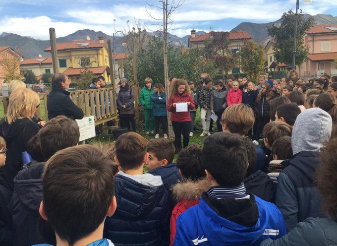 Seravezza: celebrata oggi nelle scuolela Festa dell'Albero