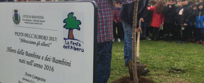 Seravezza: mercoledì torna la Festadell'Albero. Nuove piantumazioni nel Parco Pasolini e nelle scuole