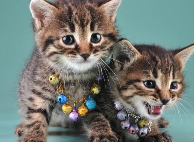 perché non dovresti mai mettere il campanellino al collo del tuo gatto
