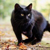 """Animali, per Difendere Lucca serve un nuovo gattile: """"Il Comune risponda alle richieste delle associazioni"""""""