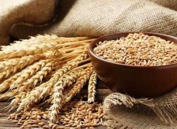 Grani antichi: sono davvero da preferire ai grani moderni? Tutto quello che devi sapere