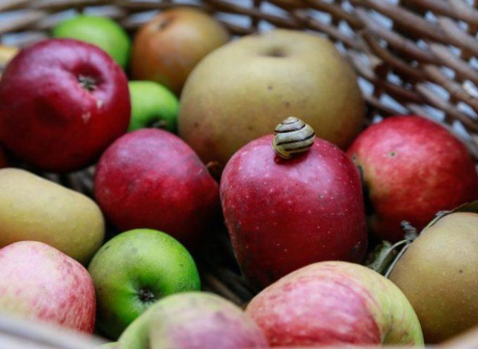 Italia invasa da mele polacche, mentre le nostre marciscono a terra.