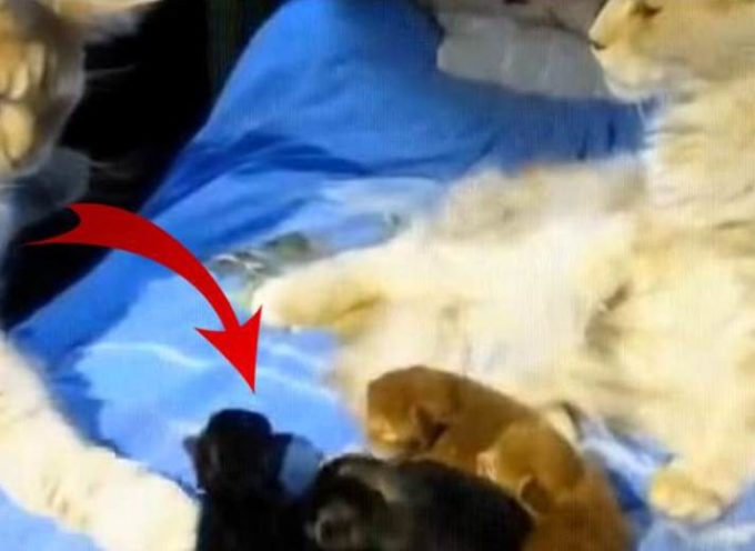 Un gatto dubita della sua paternità con due dei suoi figli e accusa il suo partner di infedeltà