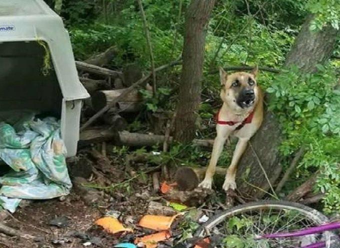 Dopo aver venduto i suoi cuccioli, lo abbandona nella spazzatura, legato crudelmente e senza cibo