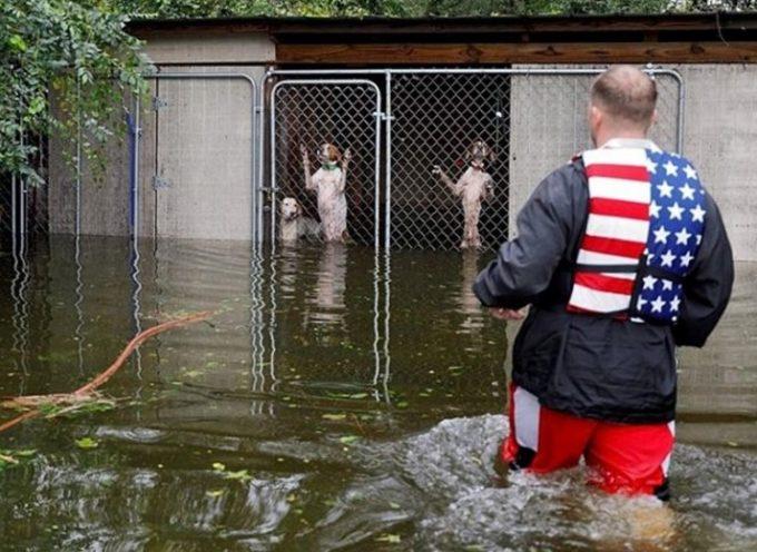 Salvano 6 cani rimasti rinchiusi in gabbia dopo l'uragano Florence