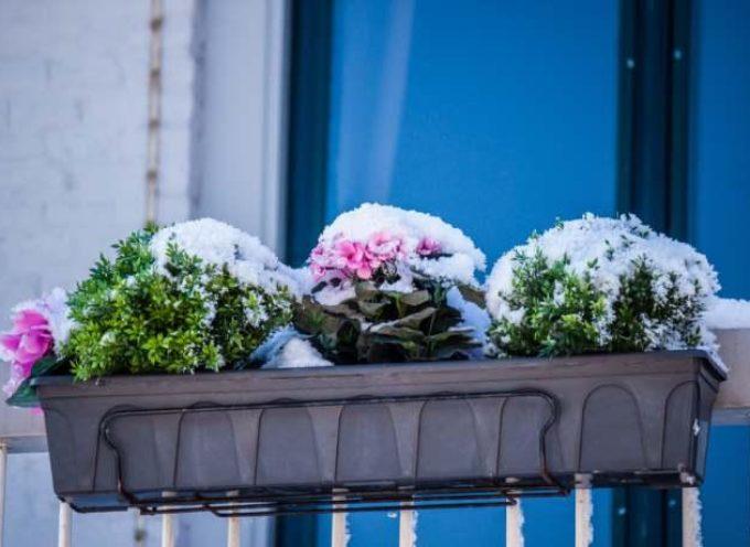 Come proteggere dal gelo le piante del terrazzo