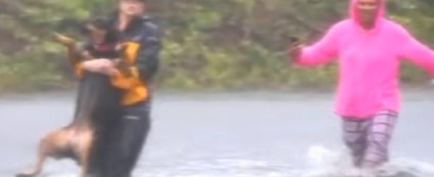 La giornalista interrompe una diretta Facebook per salvare eroicamente un cane dall'uragano Florence