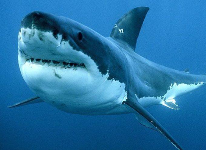 Australia squalo uccide 33enne