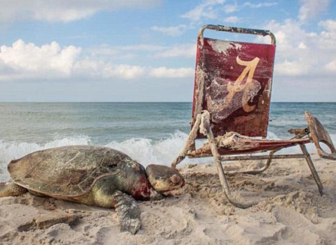 Una sedia a sdraio finisce per strangolare una innocente tartaruga marina sulle rive dell'Alabama