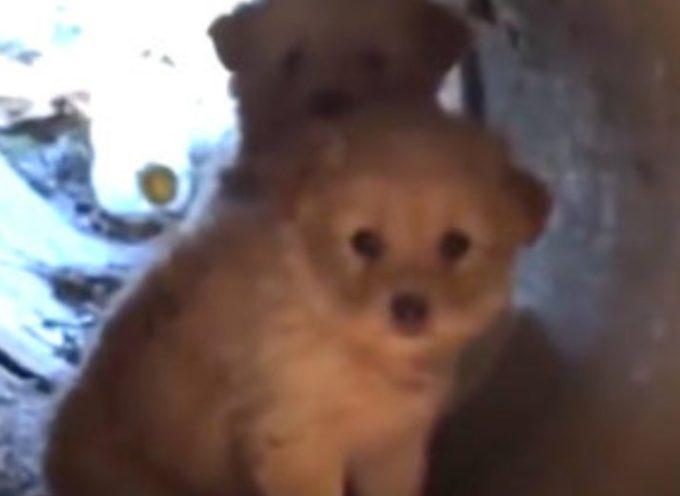 Due cuccioli terrorizzati vengono salvati da un condotto e salvati da un destino incerto