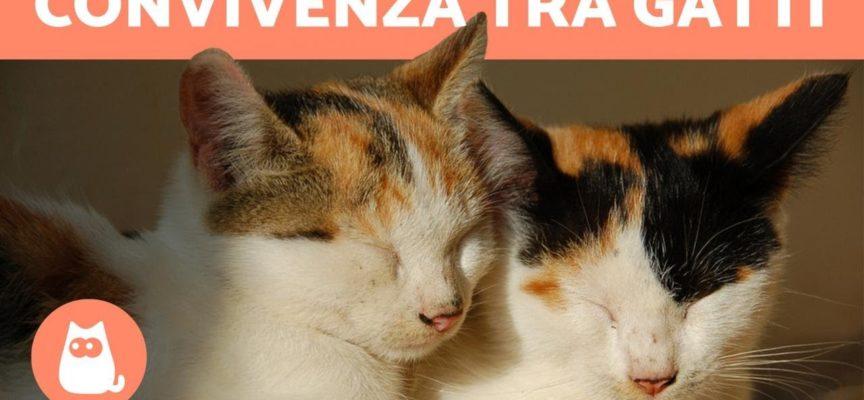 Convivenza tra gatti in casa – Come capire i gatti