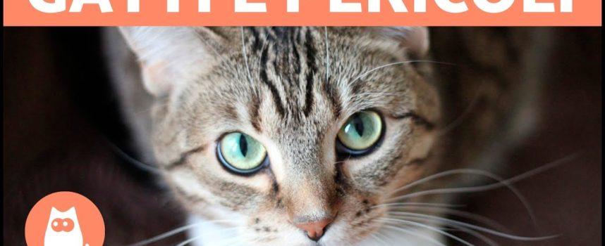 I gatti difendono i loro i padroni?