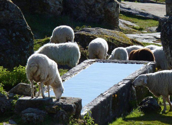 Quando la pastorizia era molto sviluppata, vi era necessità di trovare acqua per abbeverarli,