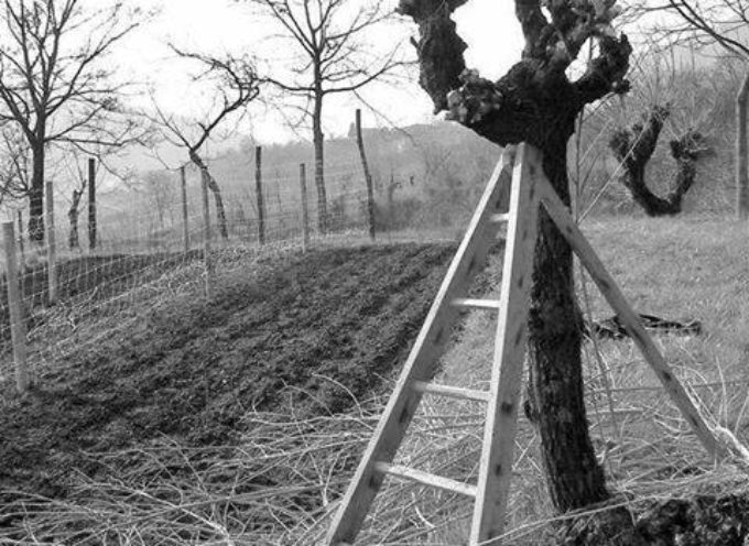La potatura secca invernale.