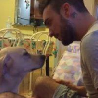 Ettore, il cane che chiede scusa