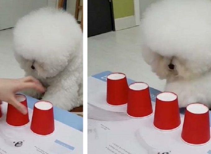 Puppy, è considerato uno dei cani più intelligenti al mondo e lascia tutti stupiti su internet
