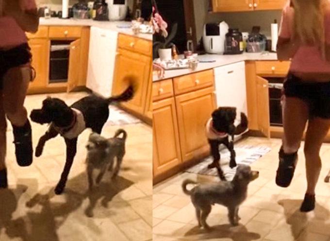 Tater vede il suo proprietario saltare su un piede e l'unica cosa che vuole è fare lo stesso