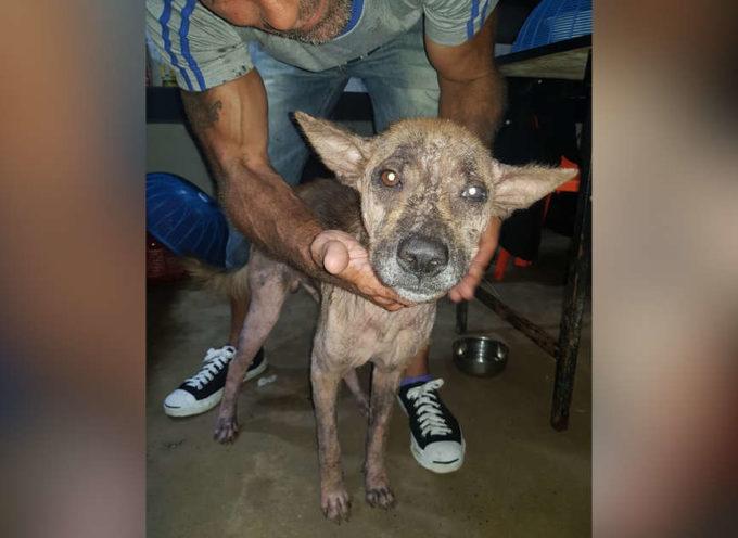 Da cane malato e terrorizzato, a cane che non riesce a smettere di coccolare il suo salvatore