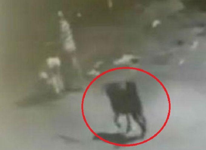 Il cane salva la donna dal tentato stupro ad Alameda Paulista